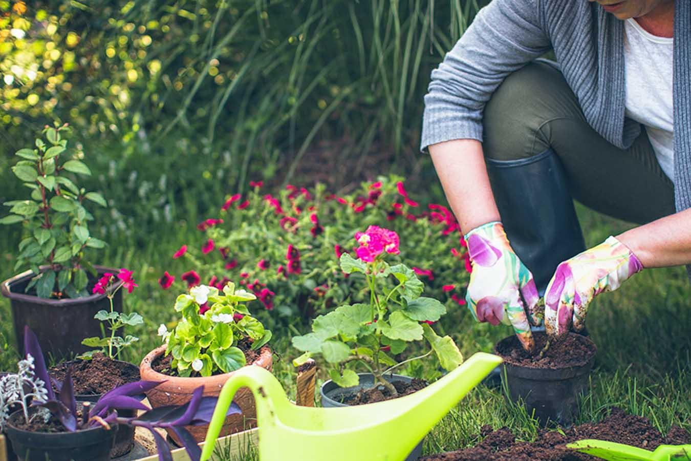 Fiori Tappezzanti Per Aiuole giardino borbonico - garden store